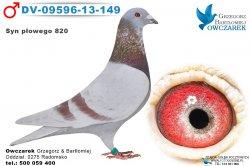 DV-09596-13-149