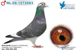 NL-08-1572083-samiec