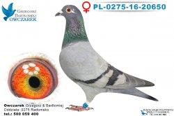 PL-0275-16-20650-0