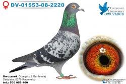 DV-01553-08-2220-samica
