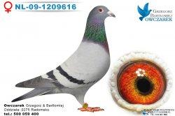NL-09-1209616-samica