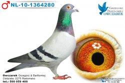 NL-10-1364280-samiec