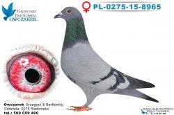 PL-0275-15-8965-0
