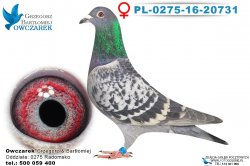 PL-0275-16-20731-0