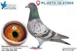 PL-0275-16-21065-0