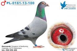 PL-0161-13-100-samiec