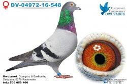 DV-04972-16-548-samica