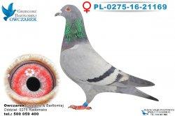 PL-0275-16-21169