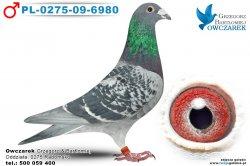 PL-0275-09-6980