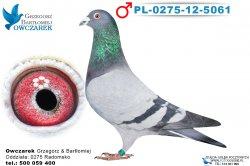 PL-0275-12-5061-1