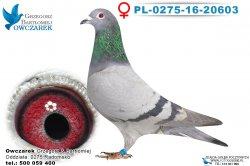 PL-0275-16-20603-0