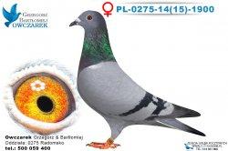 PL-0275-1415-1900-0