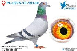 PL-0275-13-19130-0