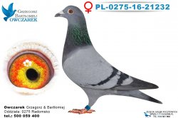 PL-0275-16-21232-0