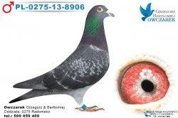samiec-PL-0275-13-8906