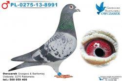 PL-0275-13-8991-1