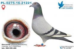 samica-PL-0275-16-21221