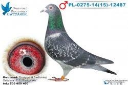PL-0275-1415-12487-samiec