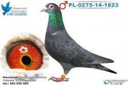 PL-0275-14-1823-samiec