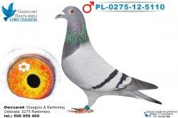 PL-0275-12-5110-1