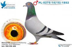 PL-0275-1415-1852-1