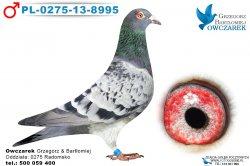 PL-0275-13-8995-1