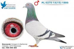 PL-0275-1415-1880-1