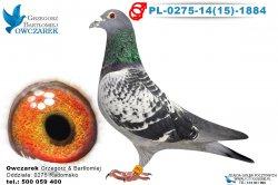 PL-0275-1415-1884-1