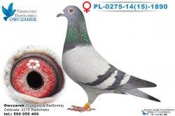 PL-0275-1415-1890-samica