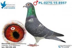 PL-0275-15-8957-samiec