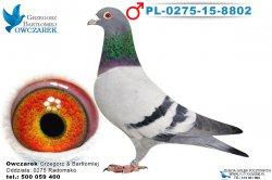 PL-0275-15-8802-1