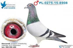 PL-0275-15-8908-1