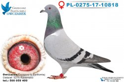 PL-0275-17-10818