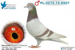 PL-0275-15-8927-1
