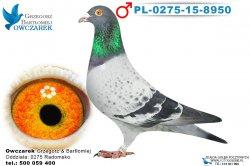 PL-0275-15-8950-1