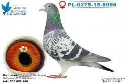 PL-0275-15-8966-samiec