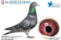 PL-0275-13-19121-samica