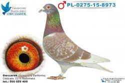 PL-0275-15-8973-1