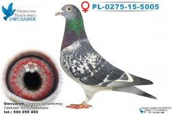 PL-0275-15-5005-samica