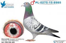 PL-0275-15-8985-1