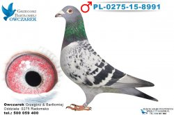 PL-0275-15-8991-1