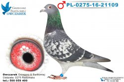 PL-0275-16-21109-1