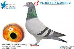 PL-0275-16-20502-1