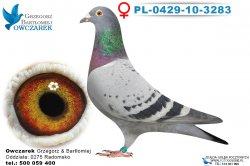 PL-0429-10-3283-samica