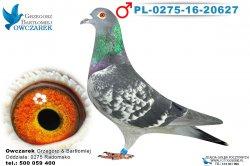 PL-0275-16-20627-1