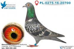 PL-0275-16-20700