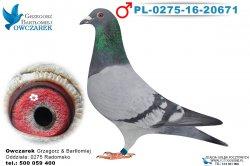 PL-0275-16-20671-1