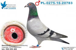 PL-0275-16-20783-1