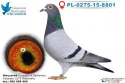 PL-0275-15-8801-0