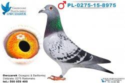 PL-0275-15-8975-1
